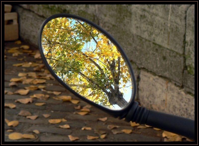 Reflet dans un oeil d'or