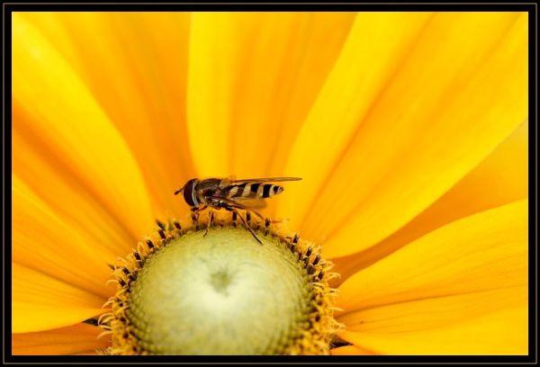Le pot  de miel