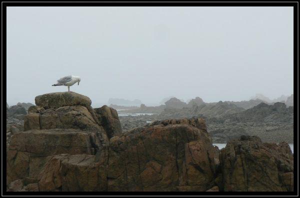 Brume mer rochers oiseaux