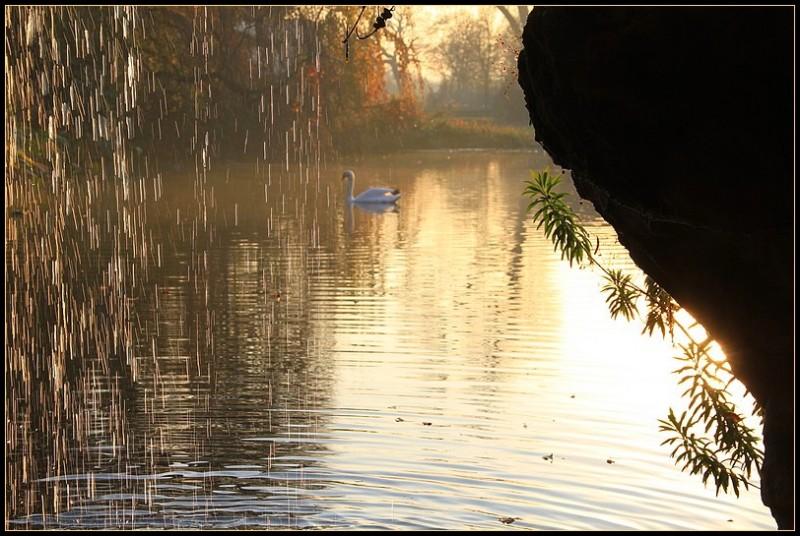 Le cygne du lac 1