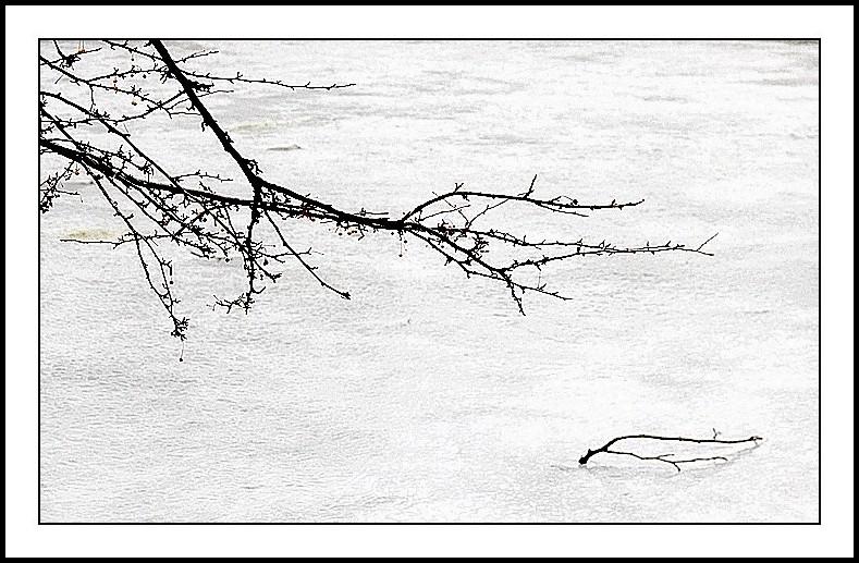 Hiver glace  étang arbres haïkus