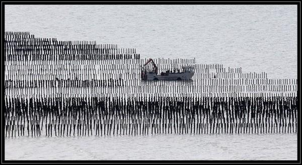 Les champs de la mer (3)