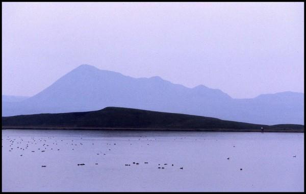 Myvatn, le lac des mouches...