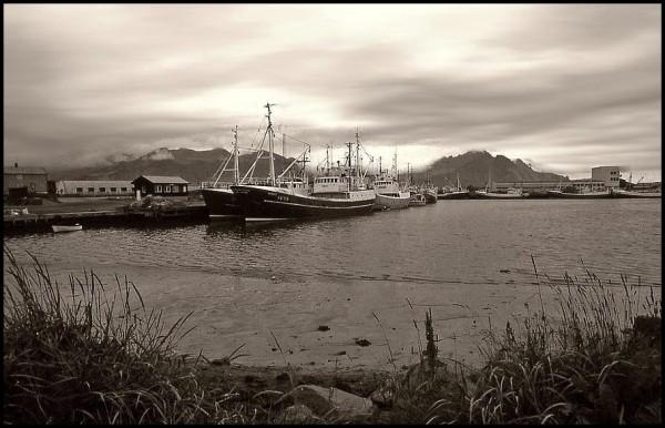 Dans le port d'Husavik - 1