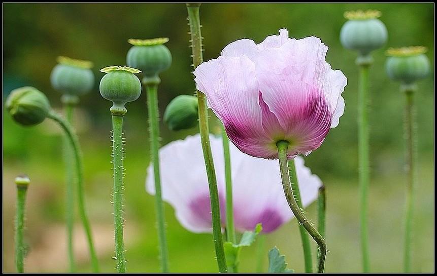 Pour voir la vie en rose...