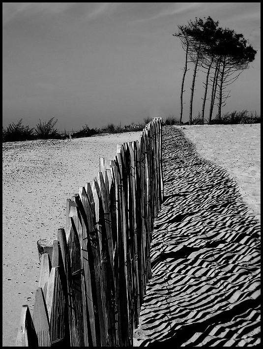 Retiens la dune..!