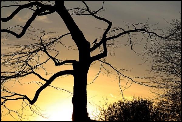 Sur son arbre perché