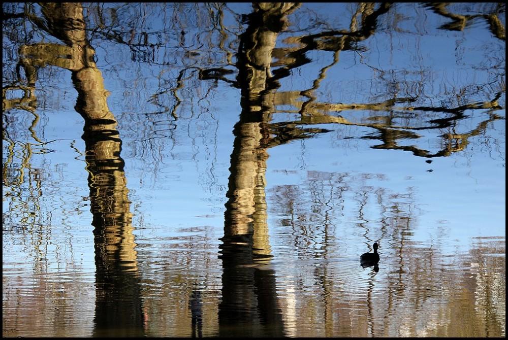 Les reflets de la vie - 1