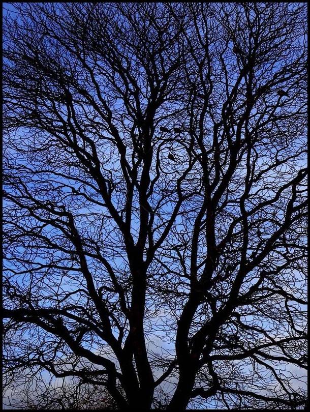 L'arbre de vie - 2