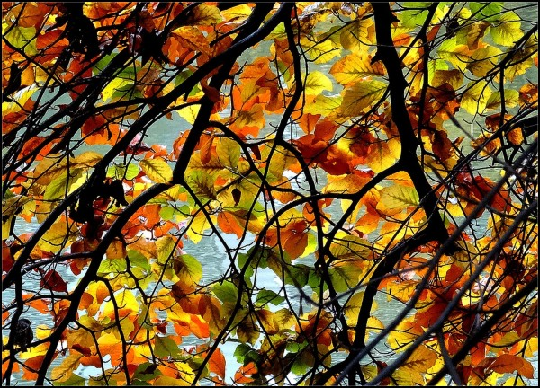 Auvent d'automne