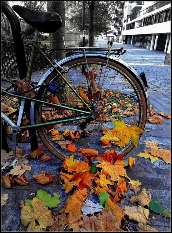 Le cycle des saisons -1