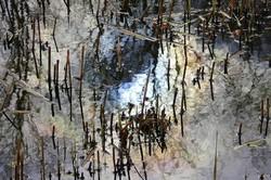 Reflets sur l'étang  ~ 2/2