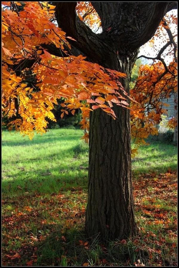 Parure d' automne - 2