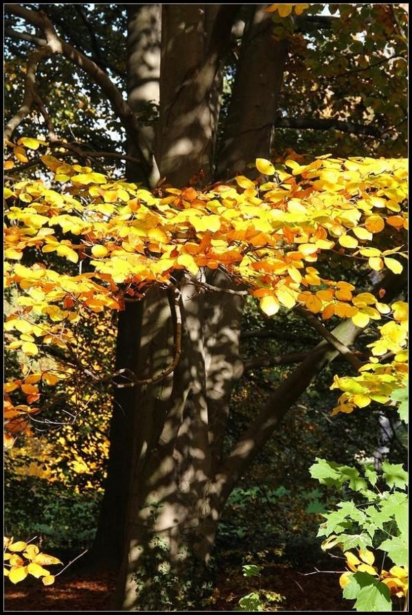 Parure d'automne -3