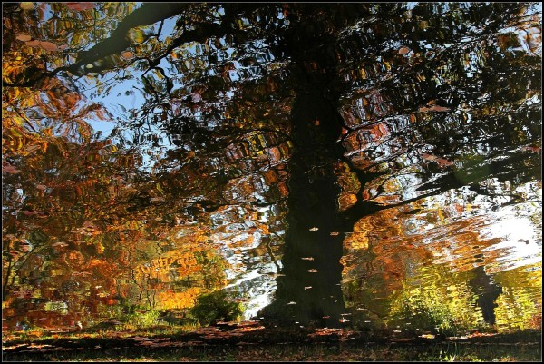 Reflets de l'automne   ~  2