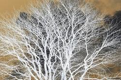 L'arbre, source de vie   2/2