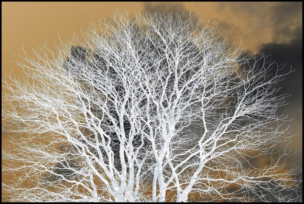L'arbre, source de vie - 2/2