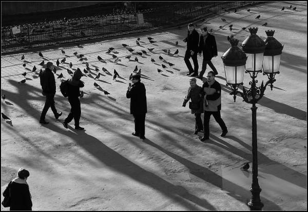 Tourtereaux et pigeons - 4