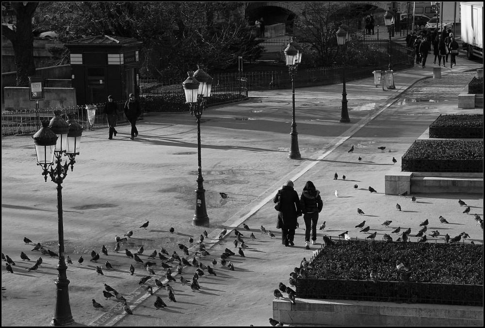 Tourtereaux et pigeons - 3
