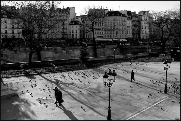 Tourtereaux et pigeons - 7/7