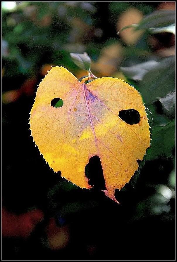 Adieu, l'automne !
