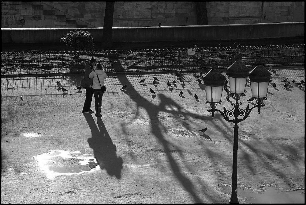 Tourtereaux et pigeons - 5
