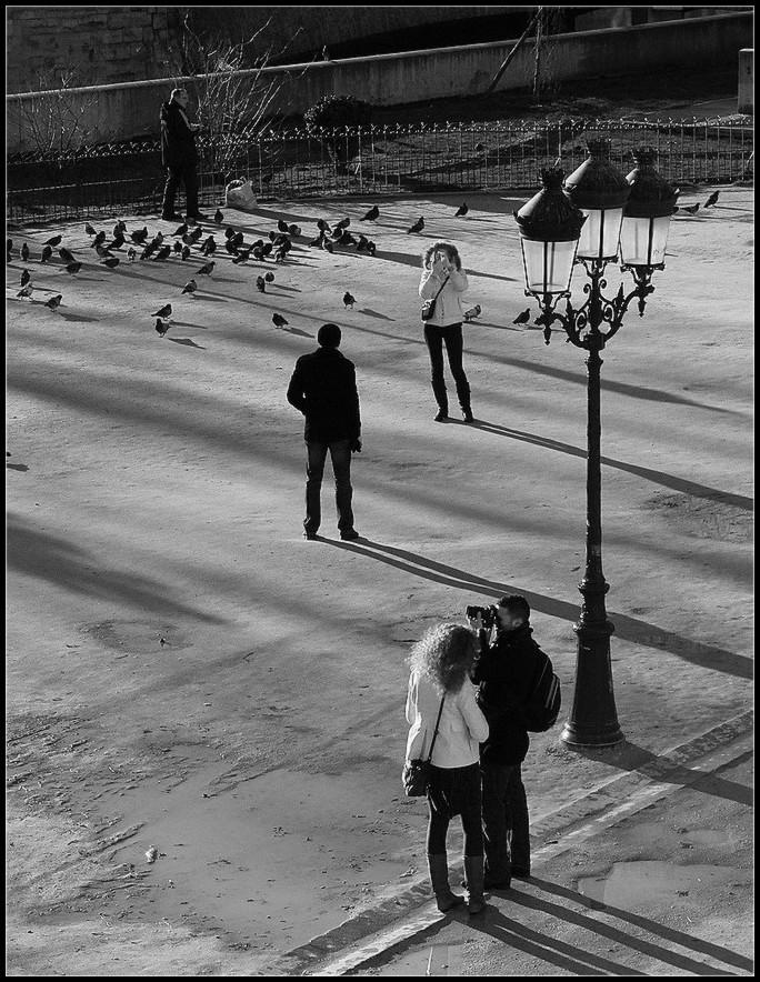 Tourtereaux et pigeons  - 1