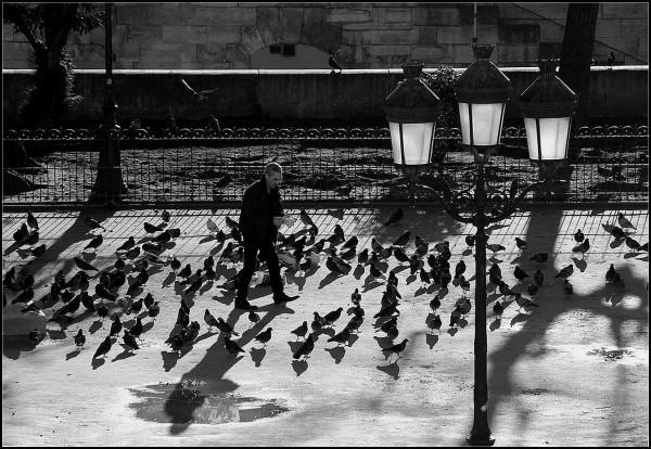 Tourtereaux et pigeons - 2