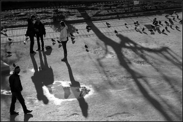 Tourtereaux et pigeons - 6/7