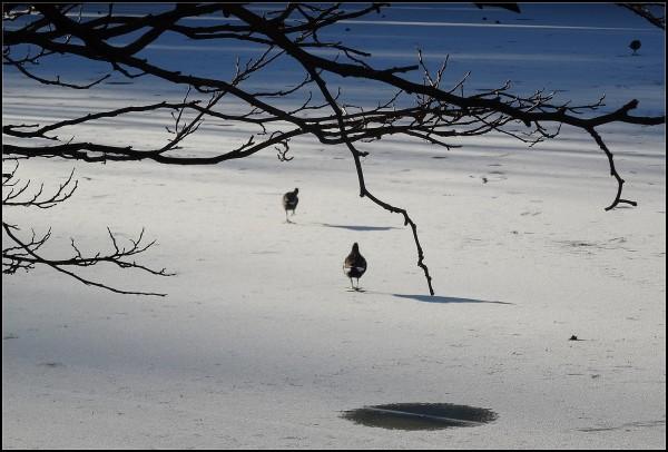 Le lac gelé -  2