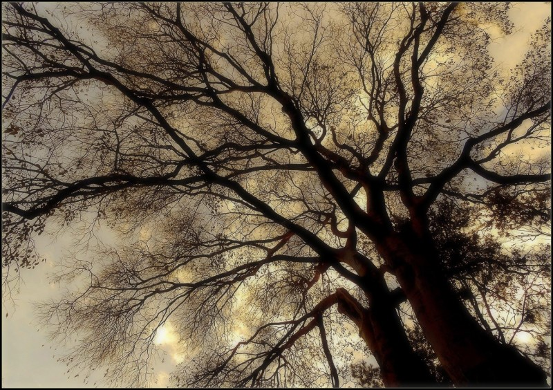 Les racines du ciel   2