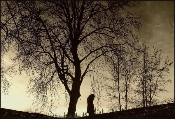 Solitudes - 6