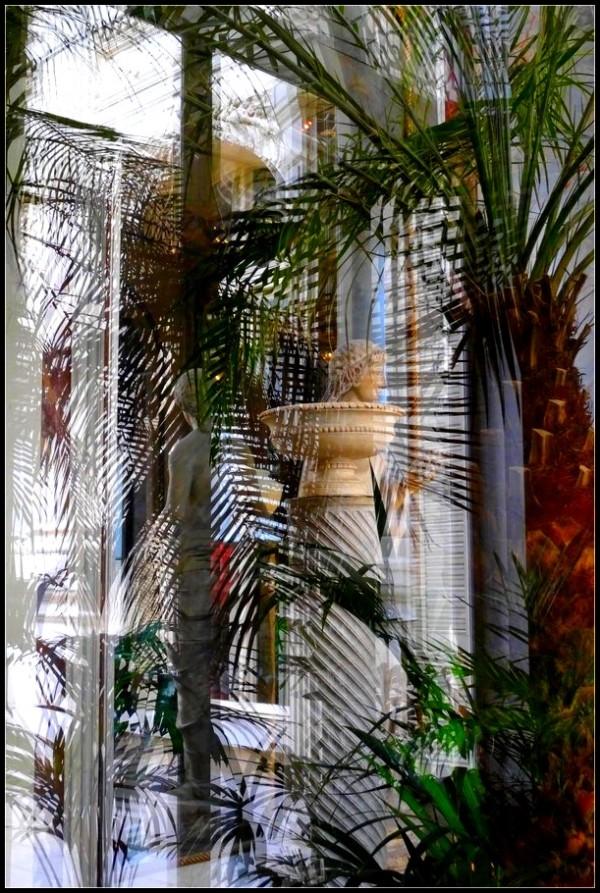 Reflets dans un jardin d'hiver