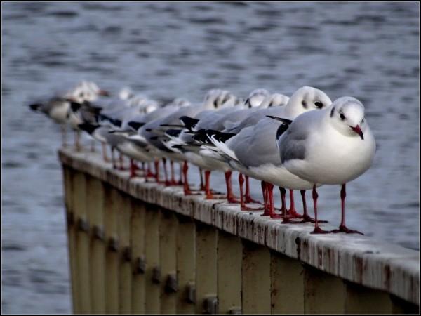 oiseaux mouettes