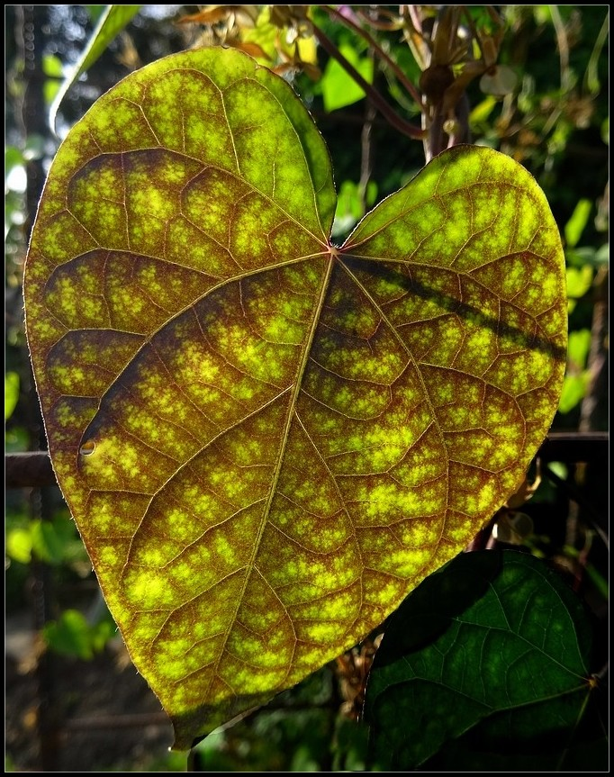 Un coeur en automne