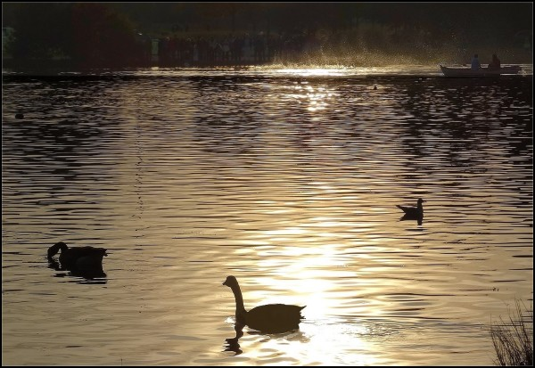 L'or du lac ~ 3