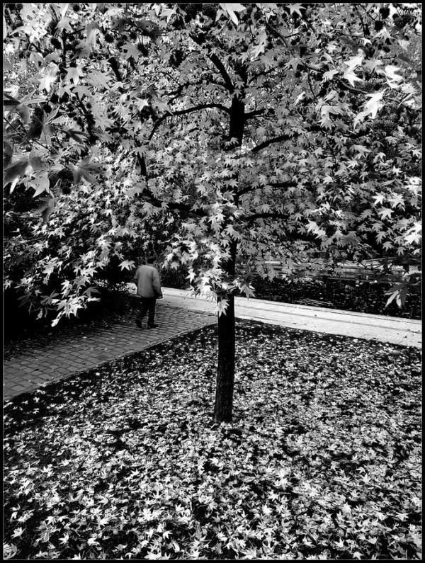 Au coeur de l'automne