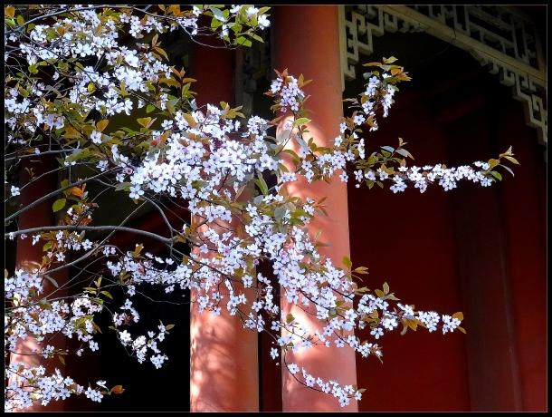 Un parfum d' Extrême - Orient  (3)