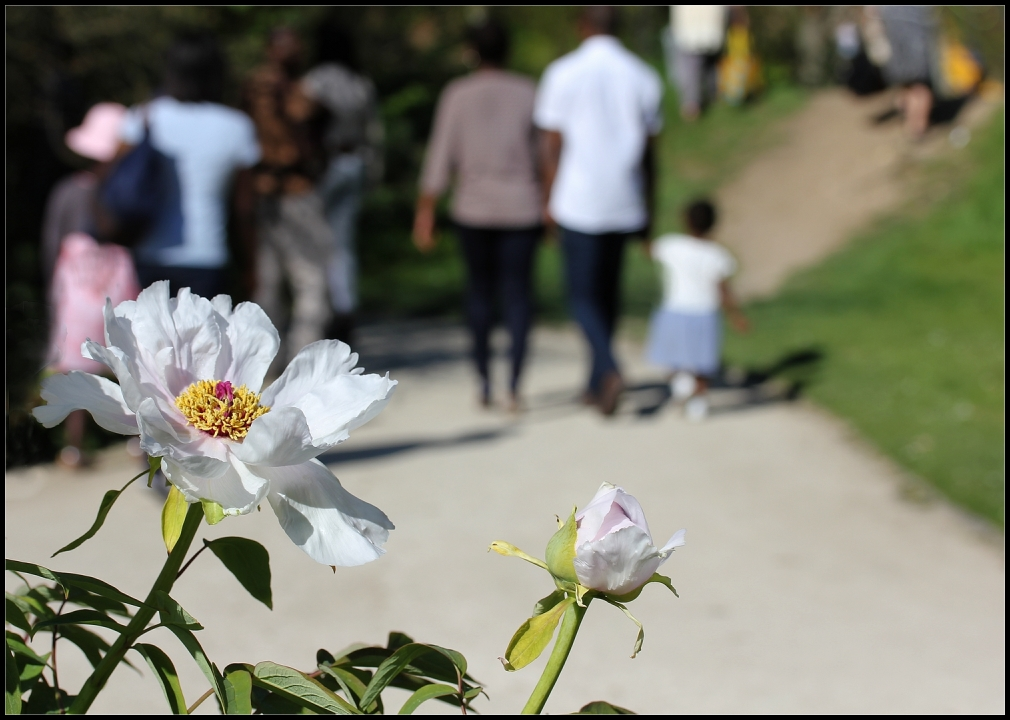 La promenade fleurie -1