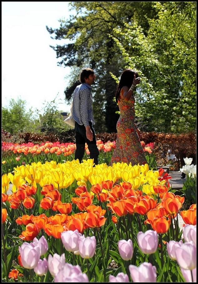 La promenade fleurie - 2