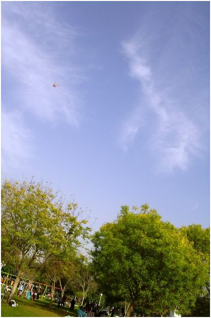 Kite in Sharjah National Park