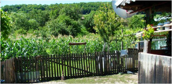 2009 07 13 Corn Field
