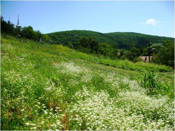 2009 07 13 Flower field