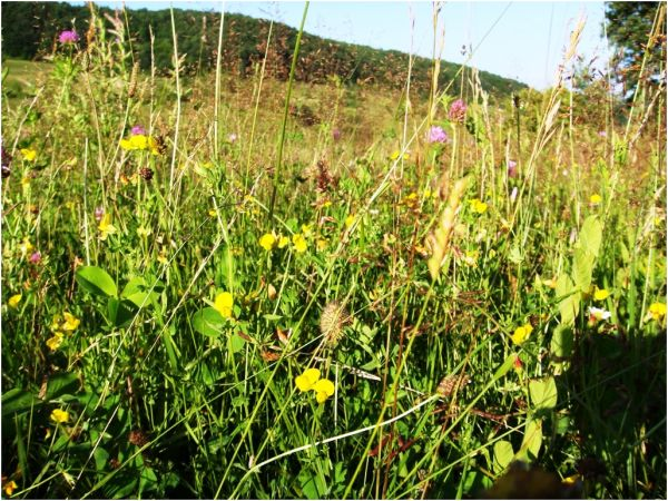 2009 07 13 Flowers' Field