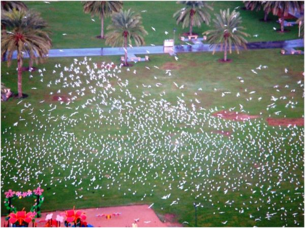 2009 12 25 Migratory birds in Al Majaz Park