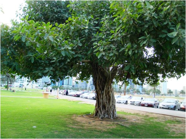 2011 01 28 Al Majaz Park
