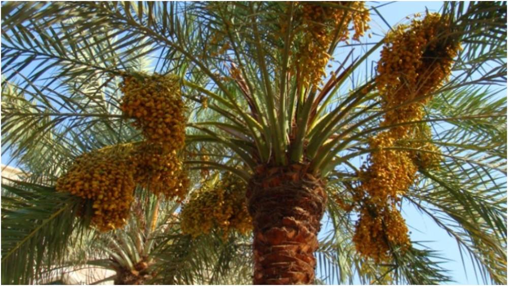 American University of Sharjah (AUS) 2012 07 02