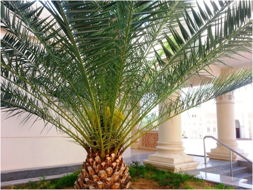 American University of Sharjah 2012 12 20