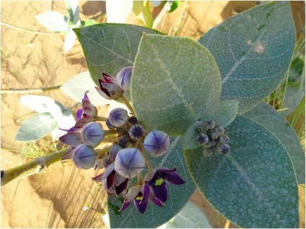 Desert Plants 2013 02 22