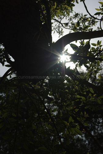 Formas de ver un árbol